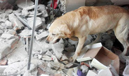 Cứu 7 nạn nhân động đất, chú chó kiệt sức mà chết
