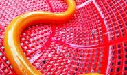 Đi đánh cá, bắt được lươn vàng quý hiếm