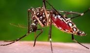 Cảnh giác cao độ phòng ngừa virus Zika