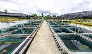 Đổi mới phát triển thủy sản bền vững