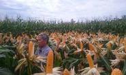 Liên kết 4 nhà giúp tăng năng suất cây trồng