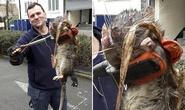 """Bắt được chuột quái vật"""" dài 1,2 mét gần vườn trẻ"""