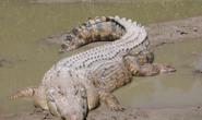 Bơi đêm sát ổ cá sấu, cô gái gặp kết cục bị thảm