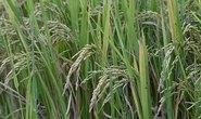 Chiến lược bền vững trong môi trường và nông nghiệp
