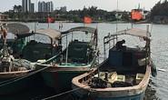 Trung Quốc bắt đầu hoảng vì tàn sát cá quá đà