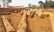 Đình chỉ công tác 4 kiểm lâm không thấy gỗ lậu
