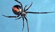 Chàng trai 2 lần bị nhện cắn cùng vị trí vào chỗ kín
