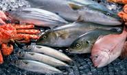 Hải sản nào ăn được ở 4 tỉnh miền Trung?