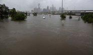 """Mỹ: """"Đảo kiến lửa"""" xuất hiện trong bão Harvey"""
