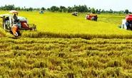 Đề xuất các giải pháp tích tụ ruộng đất