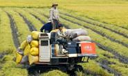 Lấy doanh nghiệp làm đầu tàu nông nghiệp