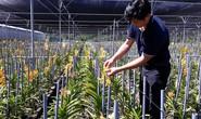 Trang trại hoa lan trên vùng đất nắng