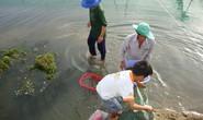 Nuôi tôm sú kiểu mới ở Ninh Thuận
