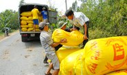 Xuất khẩu gạo lại căng thẳng