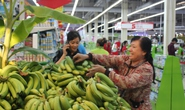 Siêu thị Big C giải cứu 100 tấn chuối ở Đồng Nai
