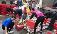 Hà Tĩnh: Xe lật, người dân giúp tài xế gom cá