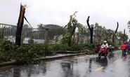 TP HCM: 6 nhà bị cây đè trong cơn mưa