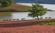 Ngây ngất với Thảo nguyên - cỏ hồng Đà Lạt dịp lễ 2-9