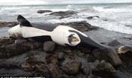 Nỗi ám ảnh đằng sau cá voi sát thủ bị nhiễm độc chưa từng thấy