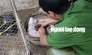Được cứu khỏi cẩu tặc, 2 chú cún chào đời tại trụ sở công an