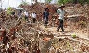 Bỏ lọt tội nhiều cán bộ tiếp tay phá rừng