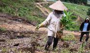Thủy điện chây ì trả nợ rừng