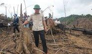 Xử lý vụ phá rừng ở Quảng Nam: Không có vùng cấm!