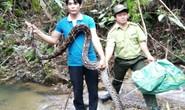 Một đầu bếp thả trăn gấm 17kg về khu bảo tồn