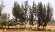 Phá nát rừng phòng hộ làm sân golf: Giấu đầu lòi đuôi
