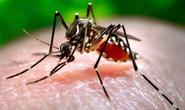 Cứ hôn môi, đừng sợ lây nhiễm virus Zika!