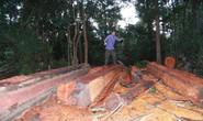Lại rầm rộ phá rừng Tây Nguyên