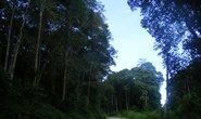 Dồn sức giữ rừng (*): Lao vào cuộc chiến