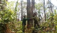 Dồn sức giữ rừng: Chặn bước lâm tặc