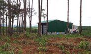 RỪNG VẪN CHẢY MÁU: Ngang nhiên mua bán đất rừng