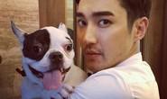 Sao Hàn bị tẩy chay vì chó cưng cắn chết người