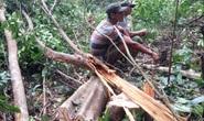 Phú Yên nuốt hàng loạt rừng