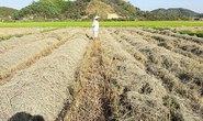 Lâm Đồng: Nhộn nhịp mua bán đất nông nghiệp