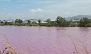 Hồ nước rộng 10 ha ở Tân Thành đổi màu tím, hôi thối