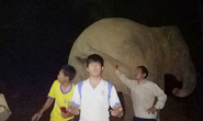 Liều mình ôm, chụp ảnh tự sướng với voi rừng trong đêm