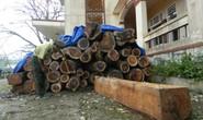 Khó hiểu chuyện mất gỗ ở rừng ma
