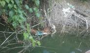 Phát hiện bộ xương nghi của công nhân Sông Bung 2 mất tích 6 tháng trước