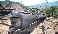 Phát hiện 10 vụ phá rừng nhưng chỉ có 1 vụ tìm ra thủ phạm