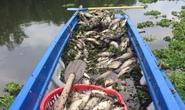 Bình Dương cá chết hàng loạt, dân lén lút ướp muối