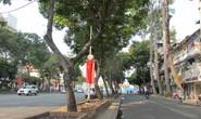 Đốn hạ 27 cây xanh trên đường Lê Lợi để xây dựng metro