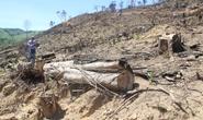 Khởi tố vụ phá rừng tự nhiên lớn nhất ở Bình Định