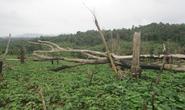 Hàng trăm cán bộ tham gia cấp đất rừng trái quy định