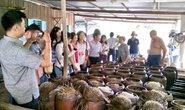 Nông nghiệp gắn với homestay trên quê hương Bác Tôn