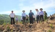 Kỷ luật chủ tịch và phó chủ tịch huyện để xảy ra phá rừng