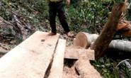 Truy bắt lâm tặc nhóm kiểm lâm bị  kẹt trong rừng 9 ngày