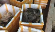 Bắt quả tang cơ sở chế biến chui gần 900 kg nội tạng động vật bẩn